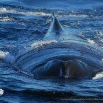 Whale One - Sunshine Coast Whale Encounters